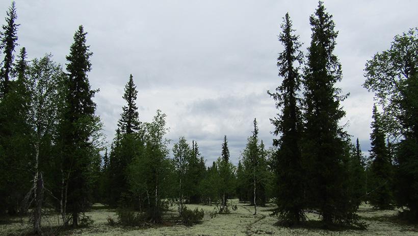 «Лешукония. Ускользающая красота»: ученые и неповторимая северная природа в новом документальном фильме